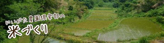 にいがた農園倶楽部の米づくり