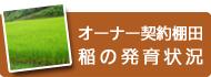 オーナー契約棚田 稲の発育状況