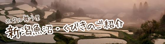 ホタル舞う里 新潟魚沼・くびきのご紹介
