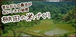 棚田の米づくり